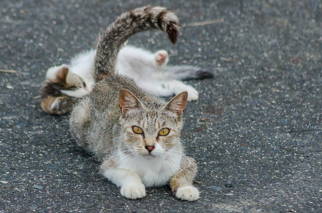 ネコさん (2Pic)