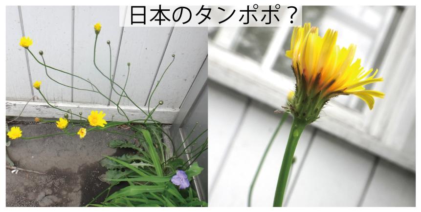 03_タンポポ?