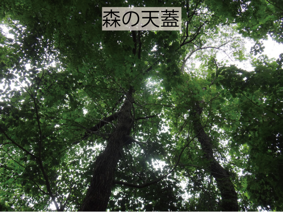 06_森の天蓋