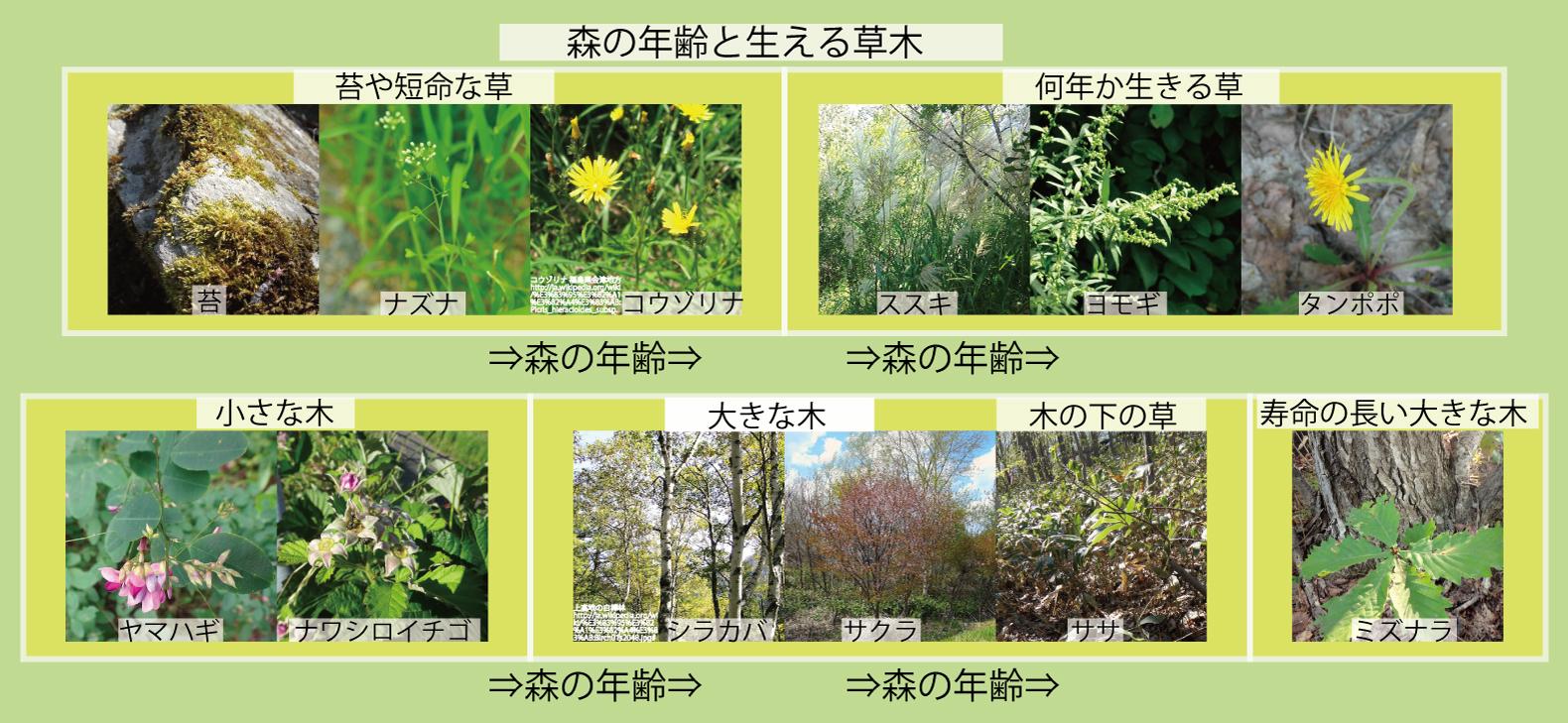 07_森の年齢と草木