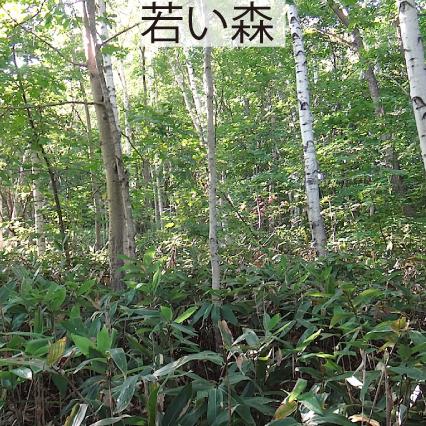 09_若い森