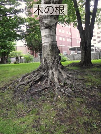 10_木の根