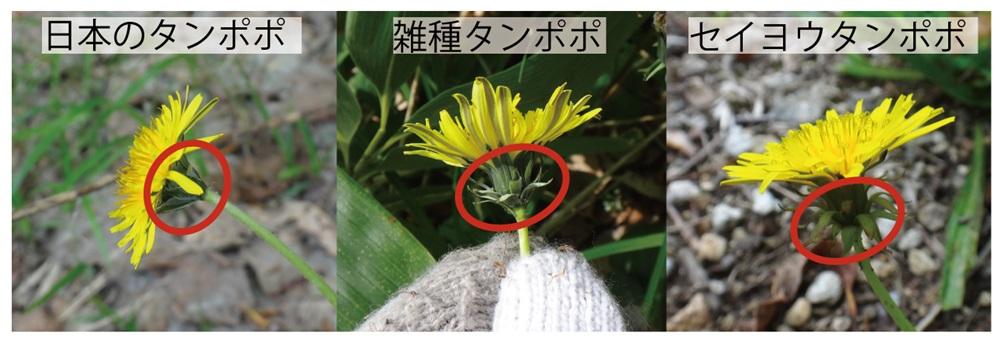 15_雑種ほか