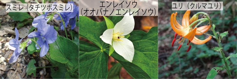 17_草3種