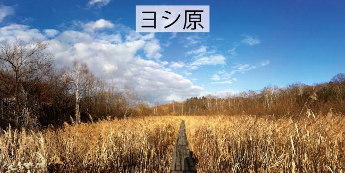 03_ヨシ原