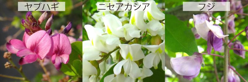 04_ヤブハギほか