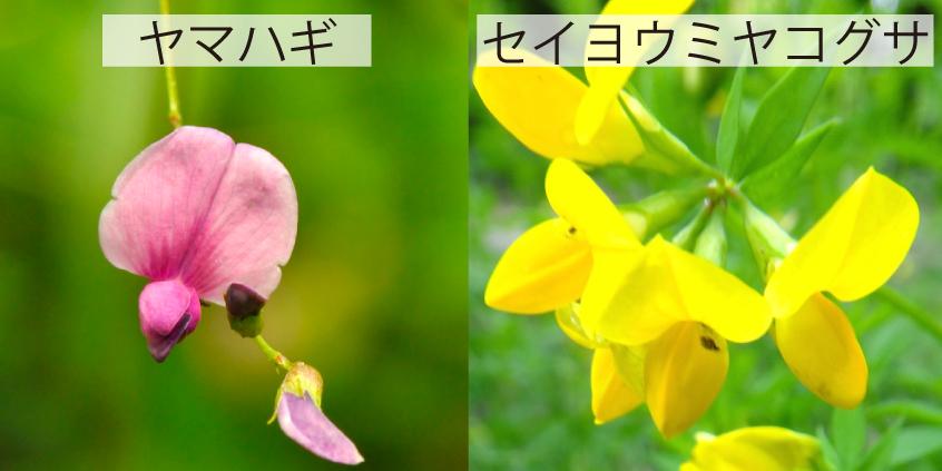 07_ミヤコグサほか