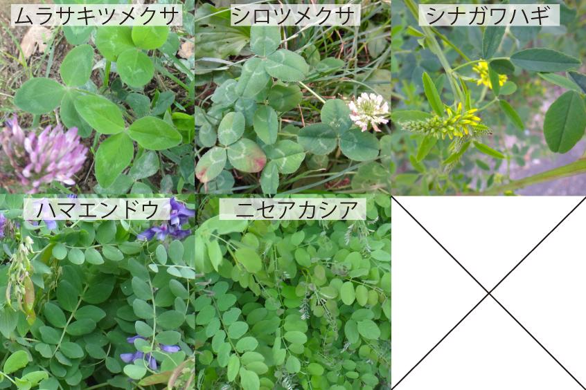 14_1マメ科の葉