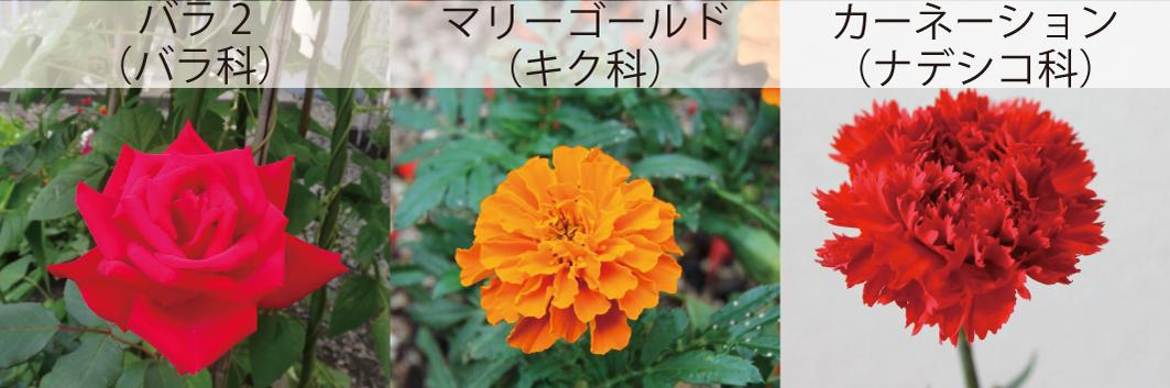 39_バラ科10八重咲き