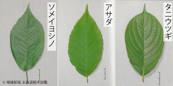 05_楕円形の葉