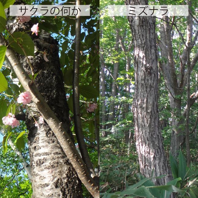 06_樹皮比較
