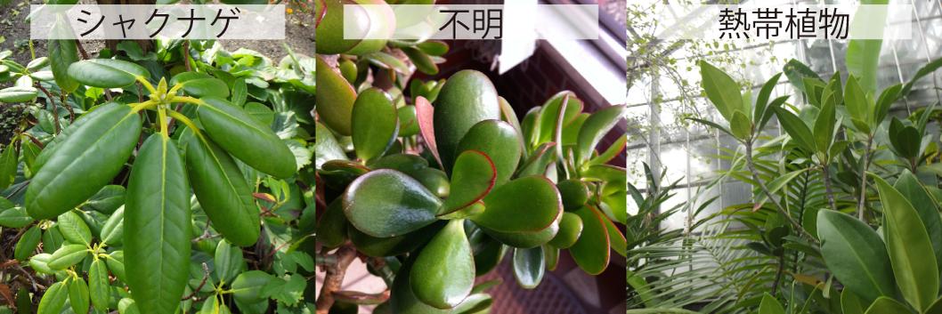 17_常緑の葉