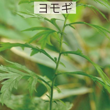 20_ヨモギ