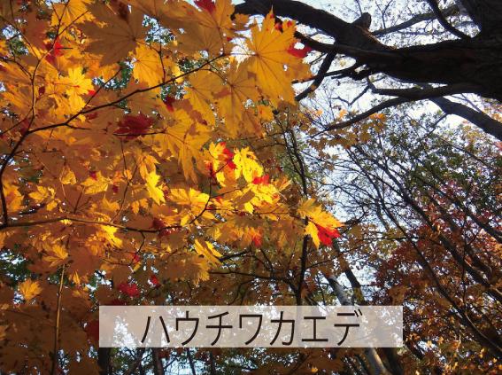 23_紅葉3