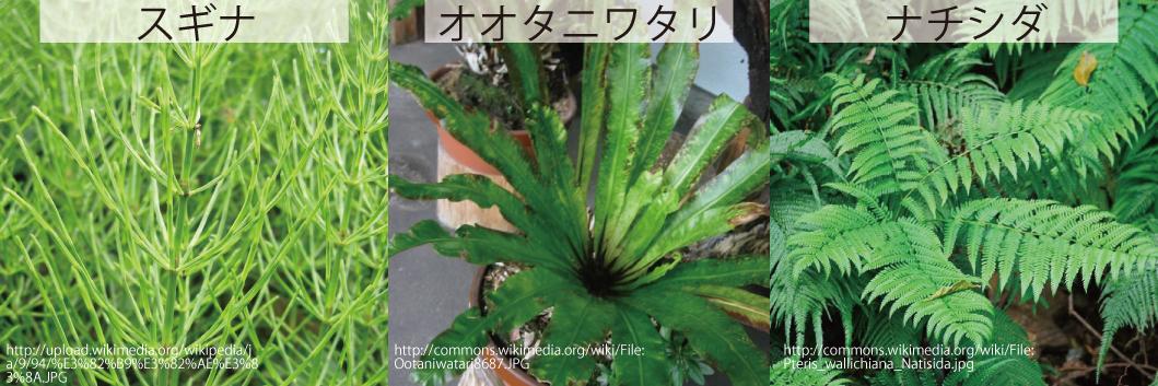 11_シダの葉