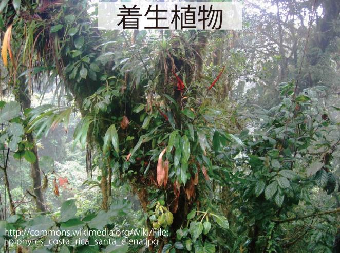 17_着生植物