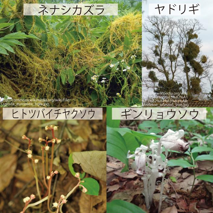 18_寄生植物と腐生植物