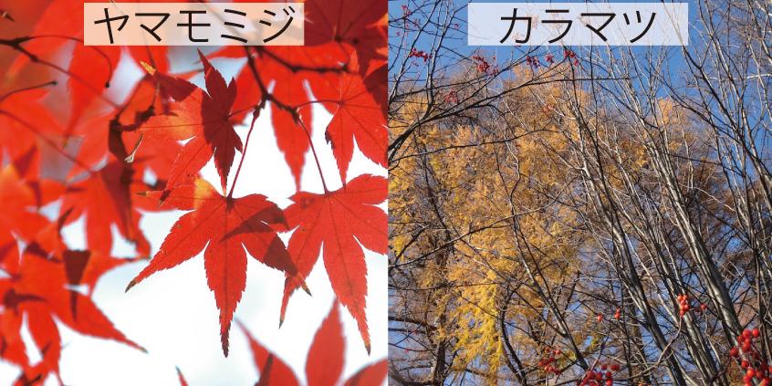 30_紅葉