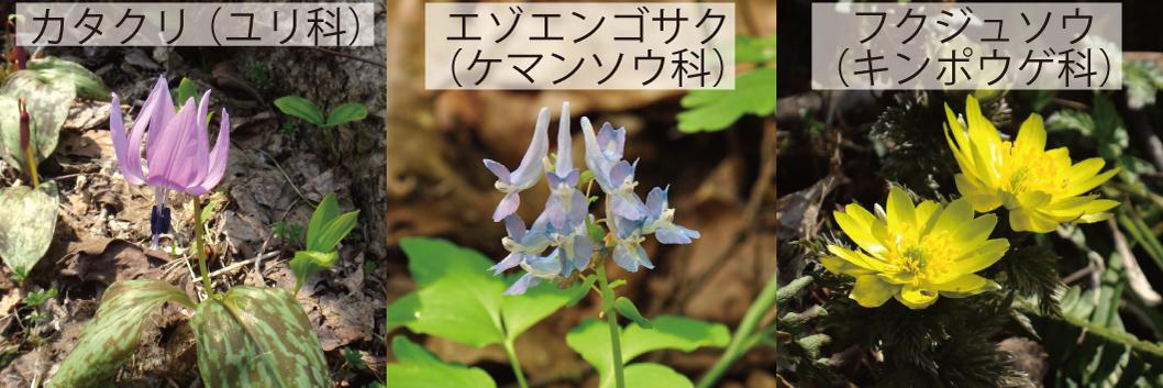 33_春植物