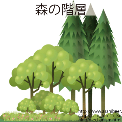 34_森の階層
