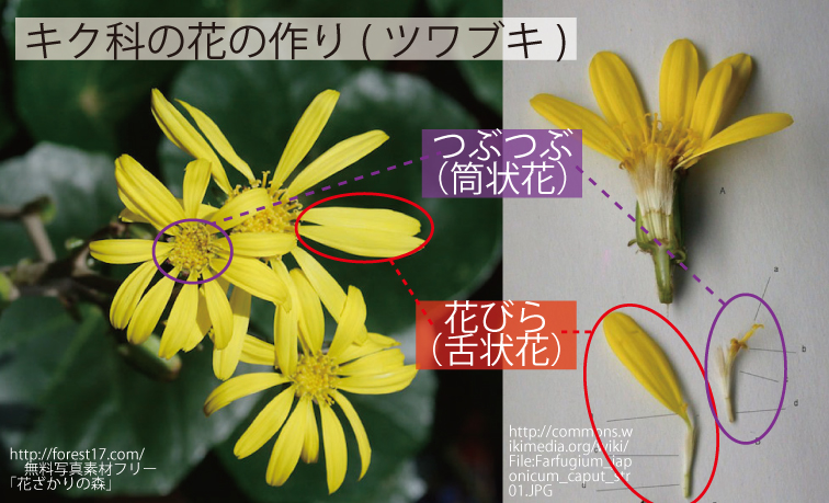 32_キク科の花の作り
