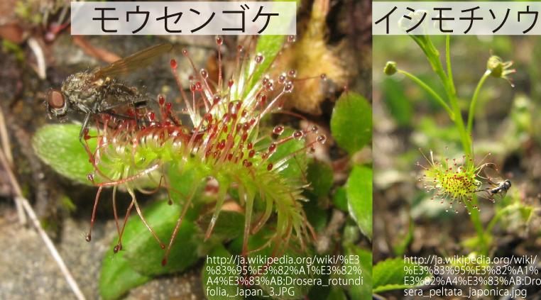 03_食虫植物