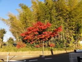 秋の紅葉2014